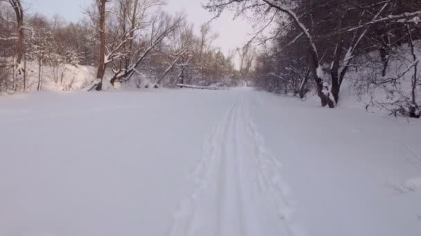 strana lyžař, pohled ze sjezdovky, pak kamera zvedá na zasněžené stromy a jasně modré obloze
