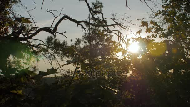 jasné slunce svítí skrze větve stromů javor a smrku v večer čas
