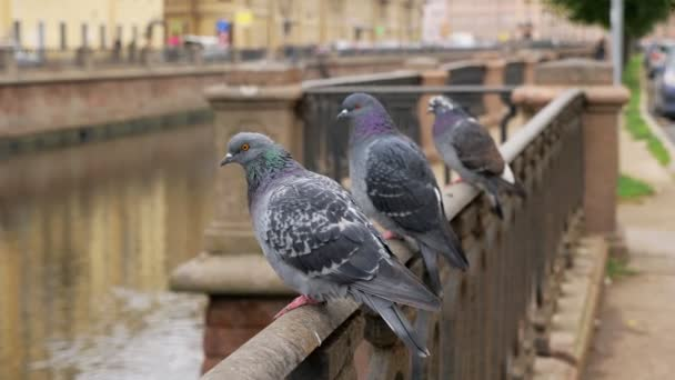 three pigeons are sitting on metal fence of city embankment in cloudy day