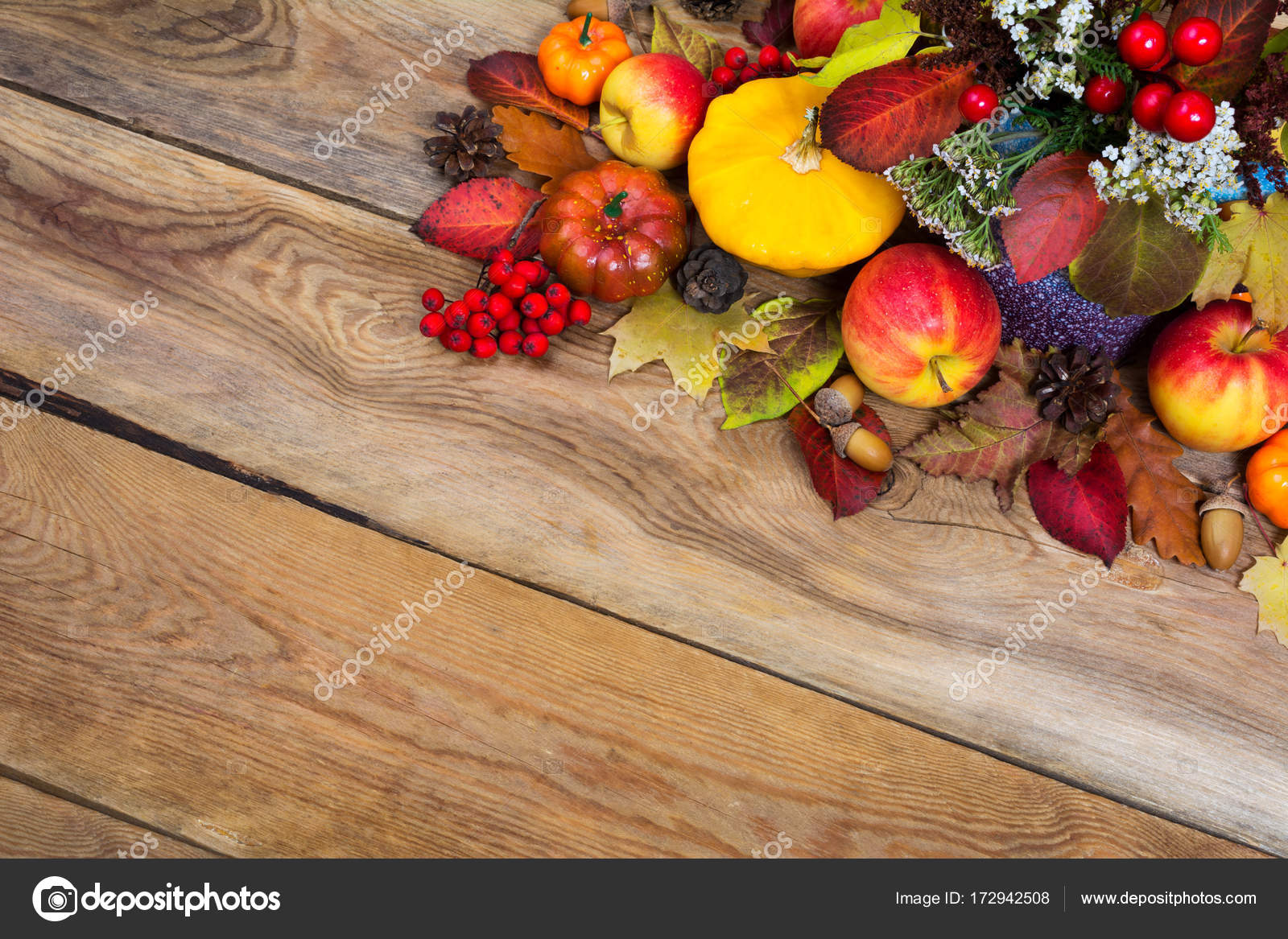 Thanksgiving background with white flowers yellow squash acorn thanksgiving background with white flowers yellow squash acorn stock photo mightylinksfo