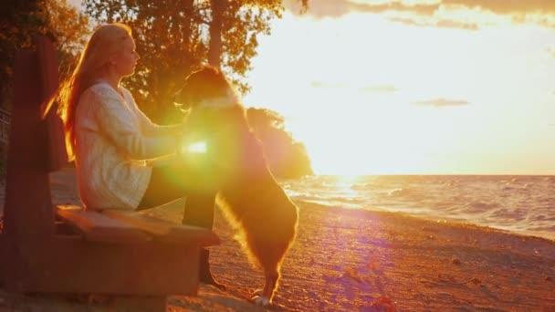 Ember és kutya barátság. Ausztrál juhászkutya nyalás szembe hűen hostess. A parkban egy padon a naplementében