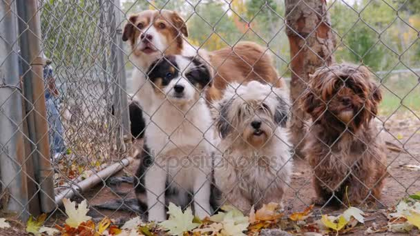 Cute puppies of different breeds of dogs in the kennel. Waiting for its owner