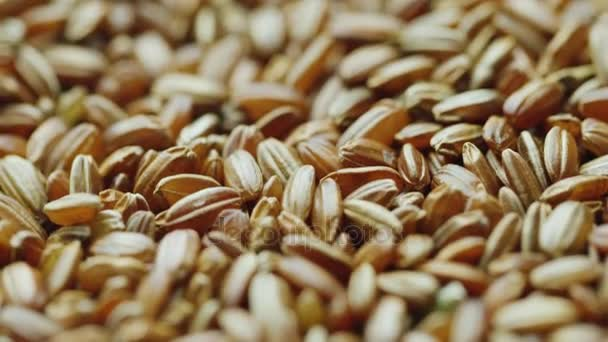 Grains choice of red rice. Diet healthy food
