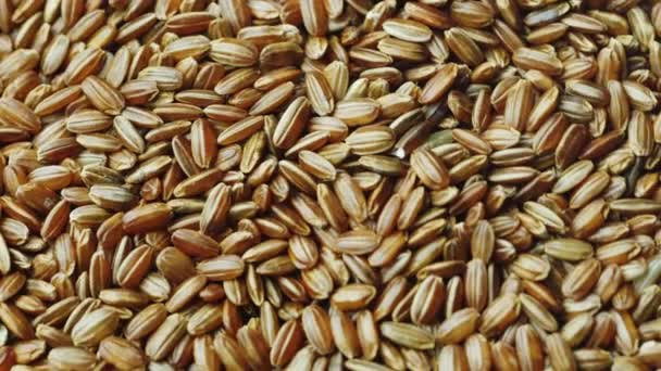 Grains choice of red rice. Diet healthy food. Rotating texture