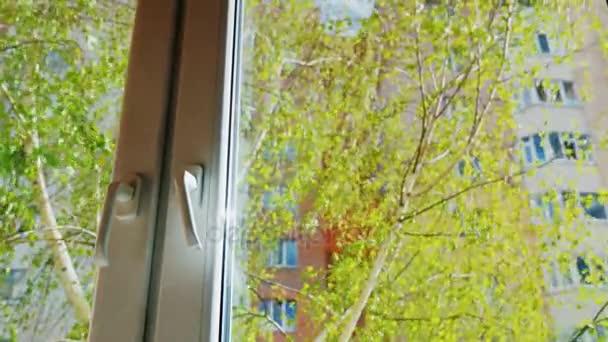 Pohled z okna domu či bytu. V popředí je plastové okno, za to je Zelený strom s čerstvě foukané listy. Jaro, slunce svítí