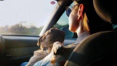 Utazás a kedvenc kutya - egy Mopszli. Egy nő egy utasülés a vezetés egy autó, a karjában egy kiskutya