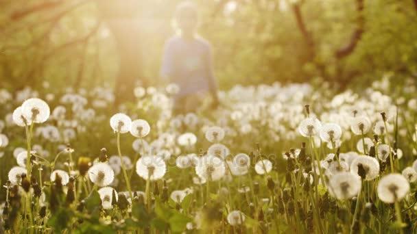 Egy gondtalan lány fut át a területen pitypang a naplemente. Szép világítás mögött, a magokat szétszórva a különböző irányokba. Boldog és gondtalan gyermekkor
