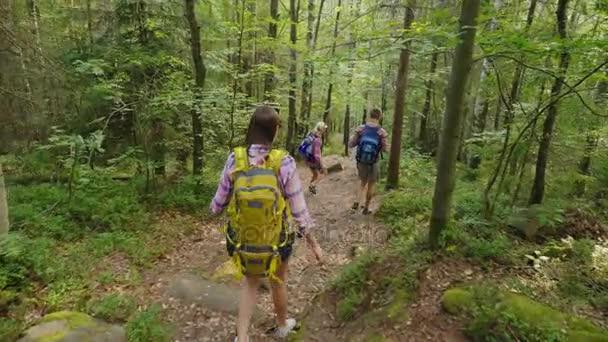 Tři přátelé jsou pěší podél horské cesty v lese. Aktivní způsob života, turistiku a horolezectví. Steadicam shot