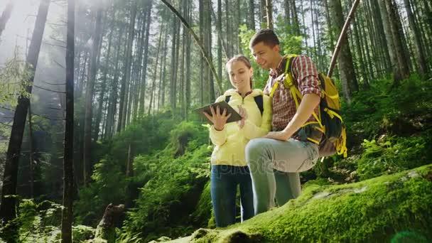 A couple of tourists with backpacks orient themselves in the forest, use a tablet. The beautiful rays of the morning sun illuminate them.