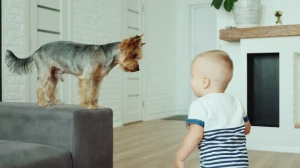 Vicces kis gyerek eszik-kutya keksz.