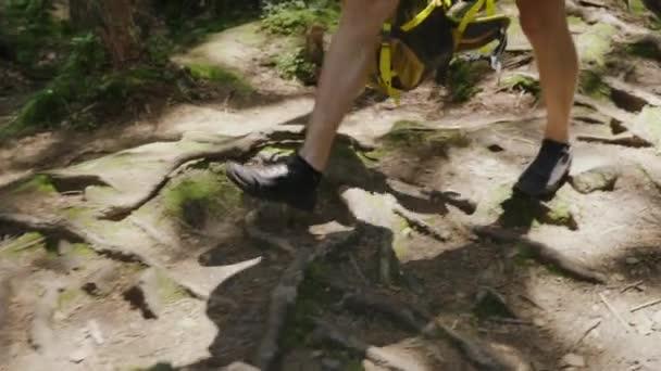 Beine eines Mannes, zu Fuß entlang einer Mountain trail entlang der Wurzeln von Bäumen. Steadicam-Schuss