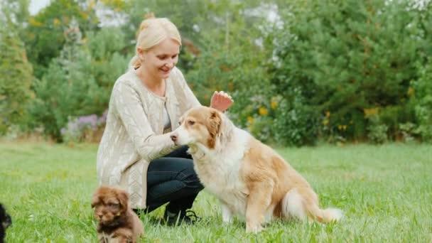Žena si hraje s zvířata po dvoře. Australský ovčák a štěňátka