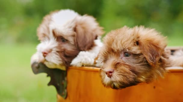 Funny puppies look out of the basket. Lovely Pets