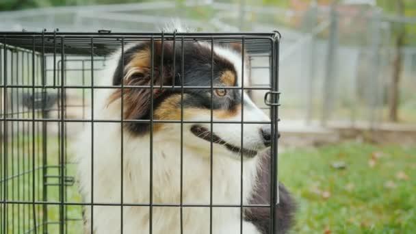 Smutný pes sedí v kleci. Kterým se přijímá domácí koncept