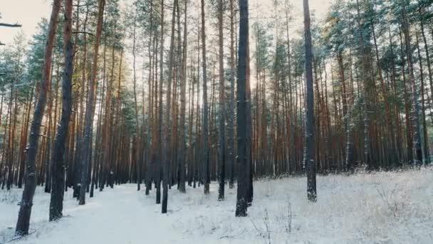 Cesta v zimním lese, slunce svítí skrz stromy. POV steadicam shot