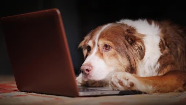 liest der Hund die Nachrichten auf dem Laptop-Bildschirm. Lustiges Tierkonzept