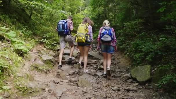 Tři přátelé turistů jsou pěší podél horské cesty v lese. Pohled zezadu. Aktivní a zdravý životní styl
