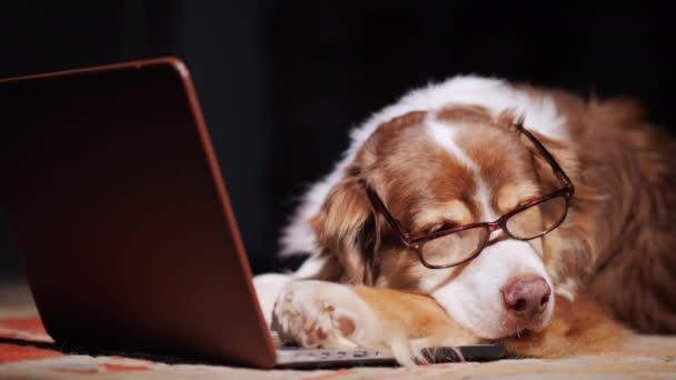 Pes v brýle na čtení je dřímající u notebooku