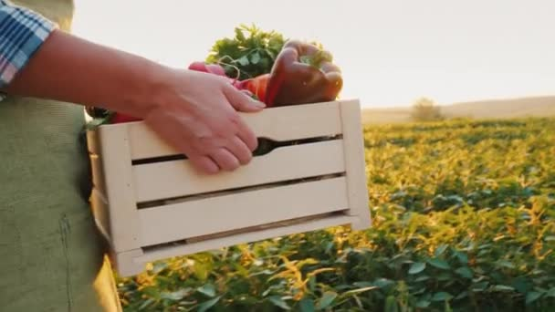 Mladý farmář nese na poli dřevěnou krabici zeleniny.