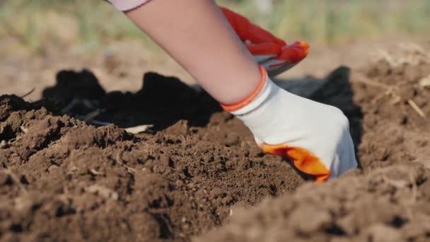 Bauern pflanzen Erbsensamen in die Erde