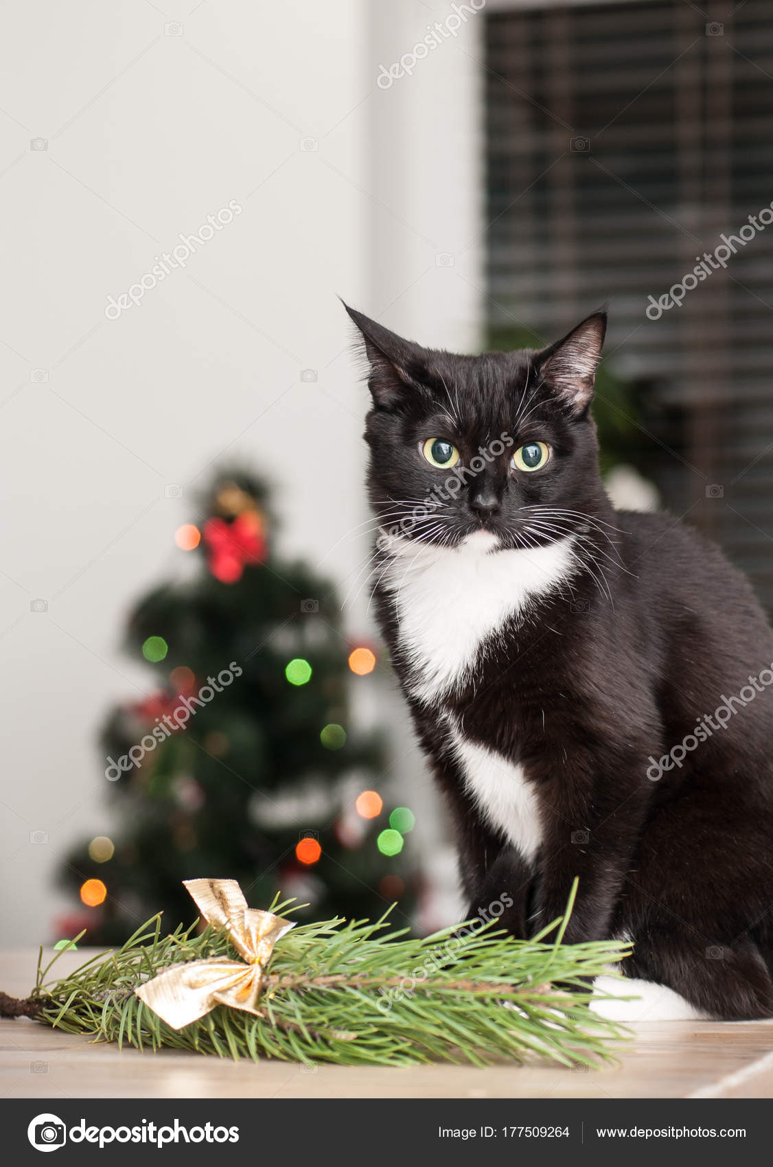 cat on the background of a christmas tree decorated with a close up photo by oksy001