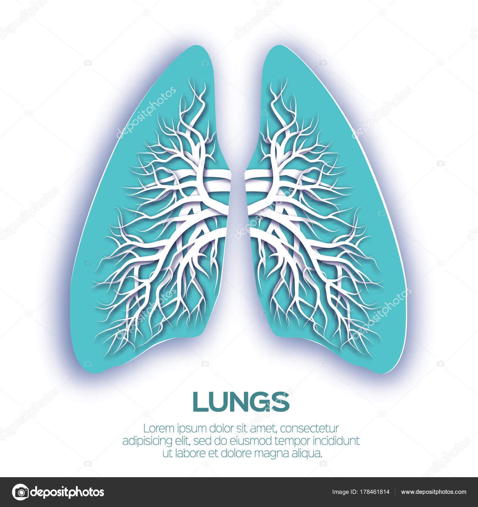 Origami de los pulmones. Papel azul cortado anatomía de pulmones ...