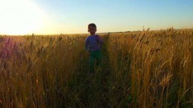 Kid runs around the wheat field against the sunset
