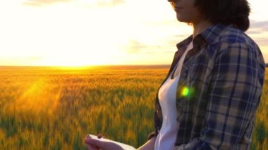 Young attractive girl at sunset in a golden wheat field looking at the phone.