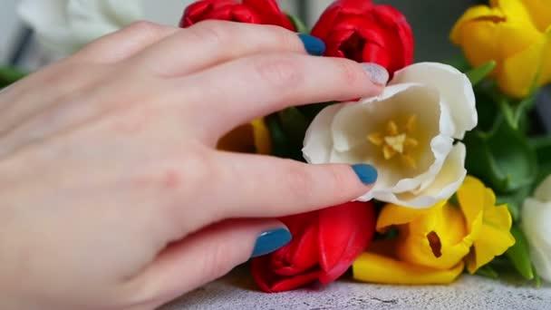 A lányok kéz érinti egy színes tulipán csokor zár-megjelöl a lassú mozgás