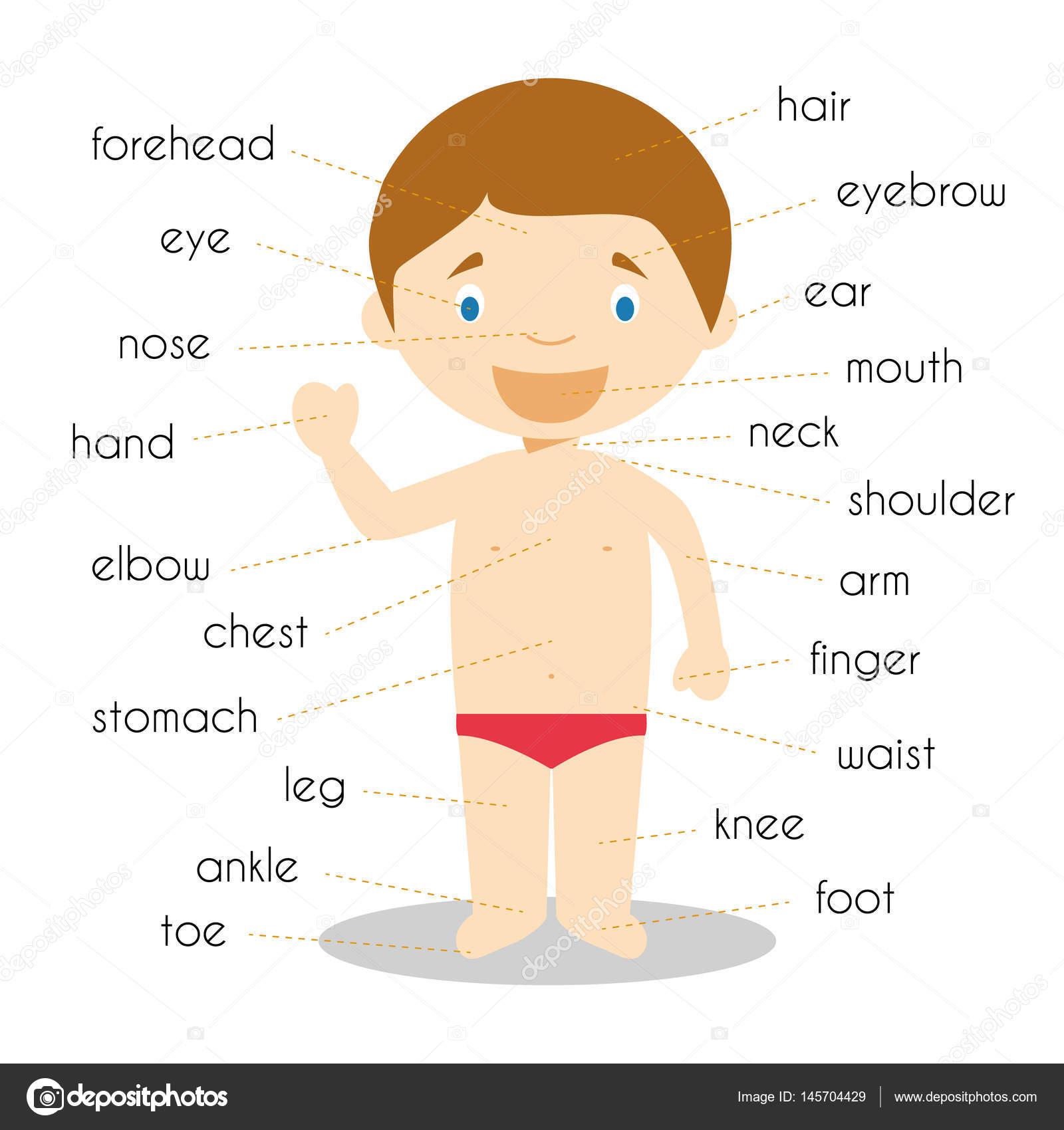 Menschliche Körperteile Wortschatz Vektor-Illustration — Stockvektor ...