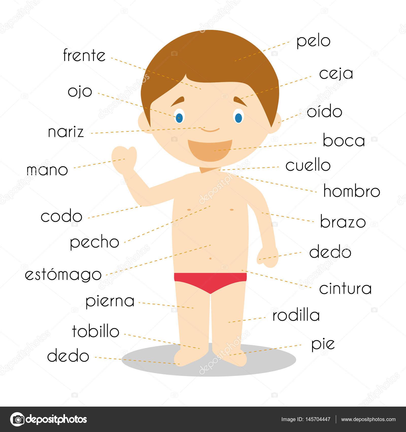 Partes del cuerpo humano vocabulario en Español ilustración ...