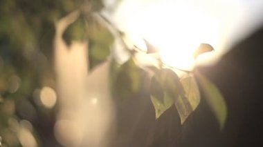 The sun shines through the green leaves of the tree