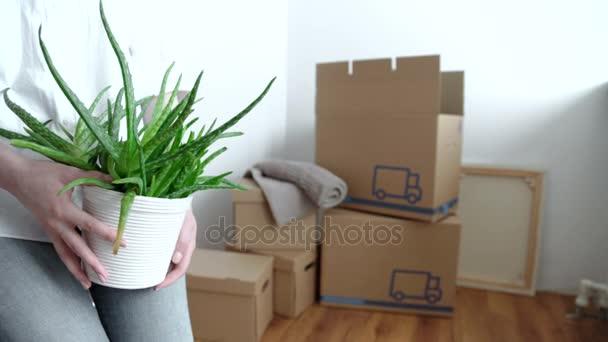 Gepackte Hausrat für Einzug in neues Haus