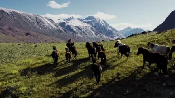 Divocí koně běží. Stádo koní běžících po stepích v pozadí hory. Západ slunce