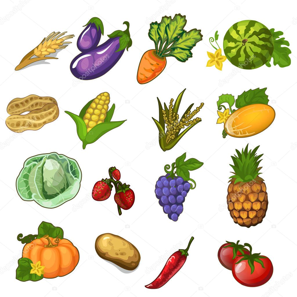 Big vector set of vegetables, berries and fruits