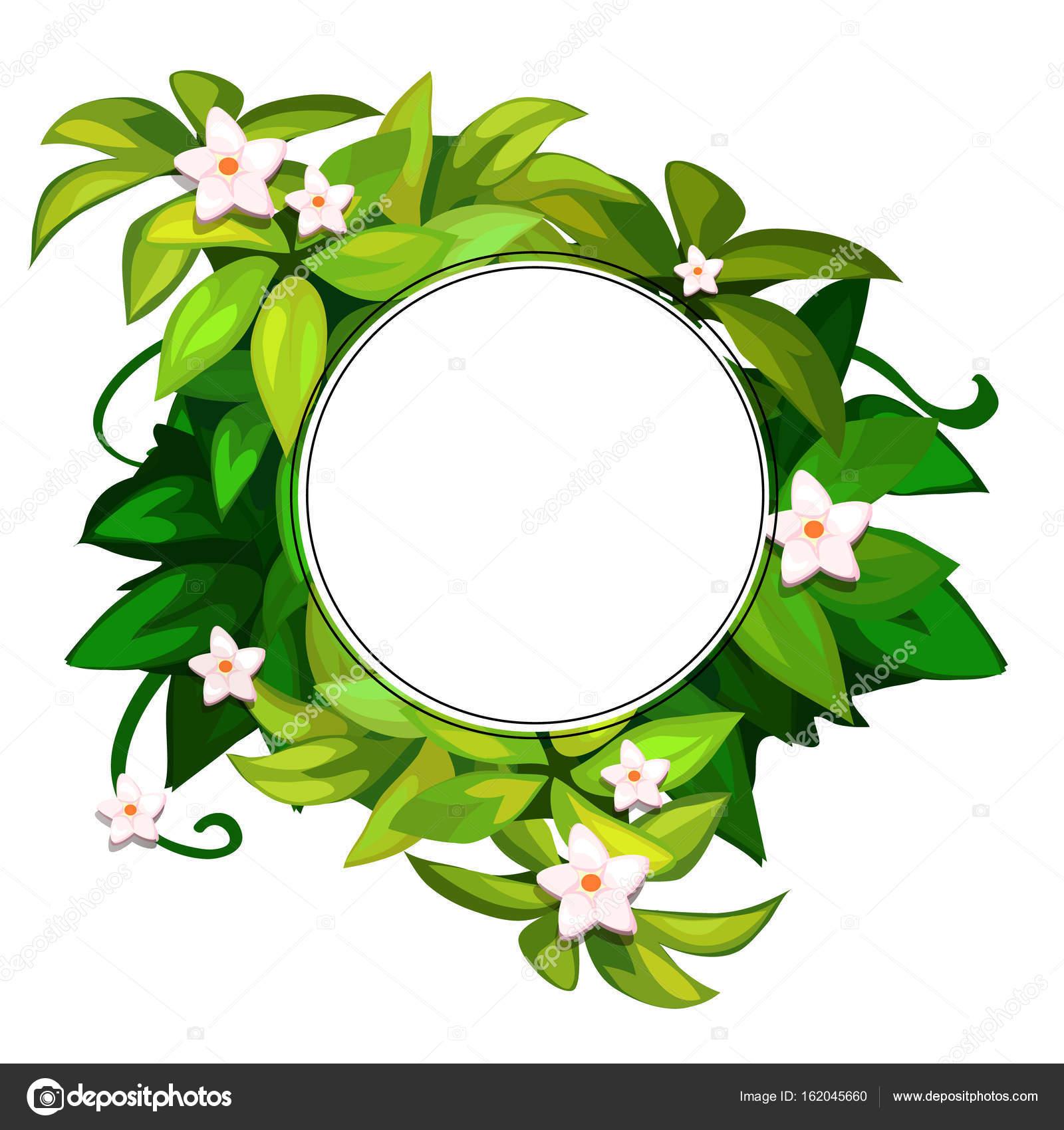 Красивые зелёные картинки 35 фото  Прикольные картинки
