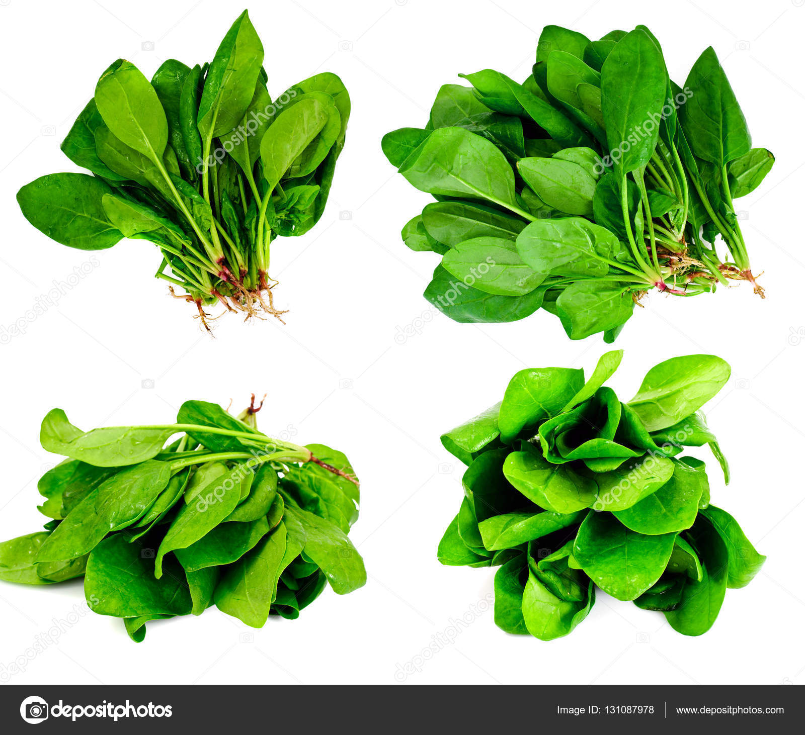 Fotos hojas de espinacas 65