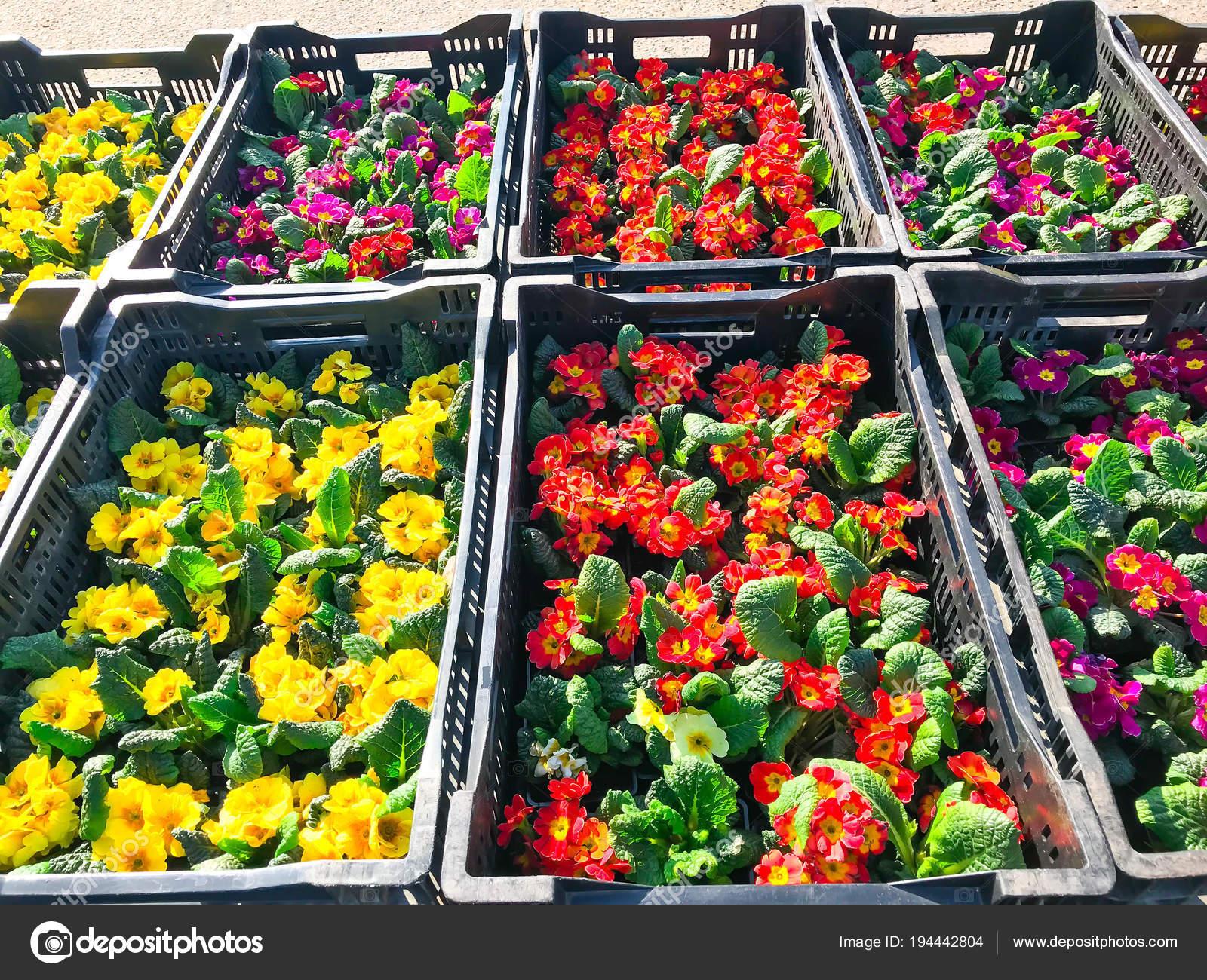 Saplings Of Flowers For Spring Landing In Garden Stock Photo