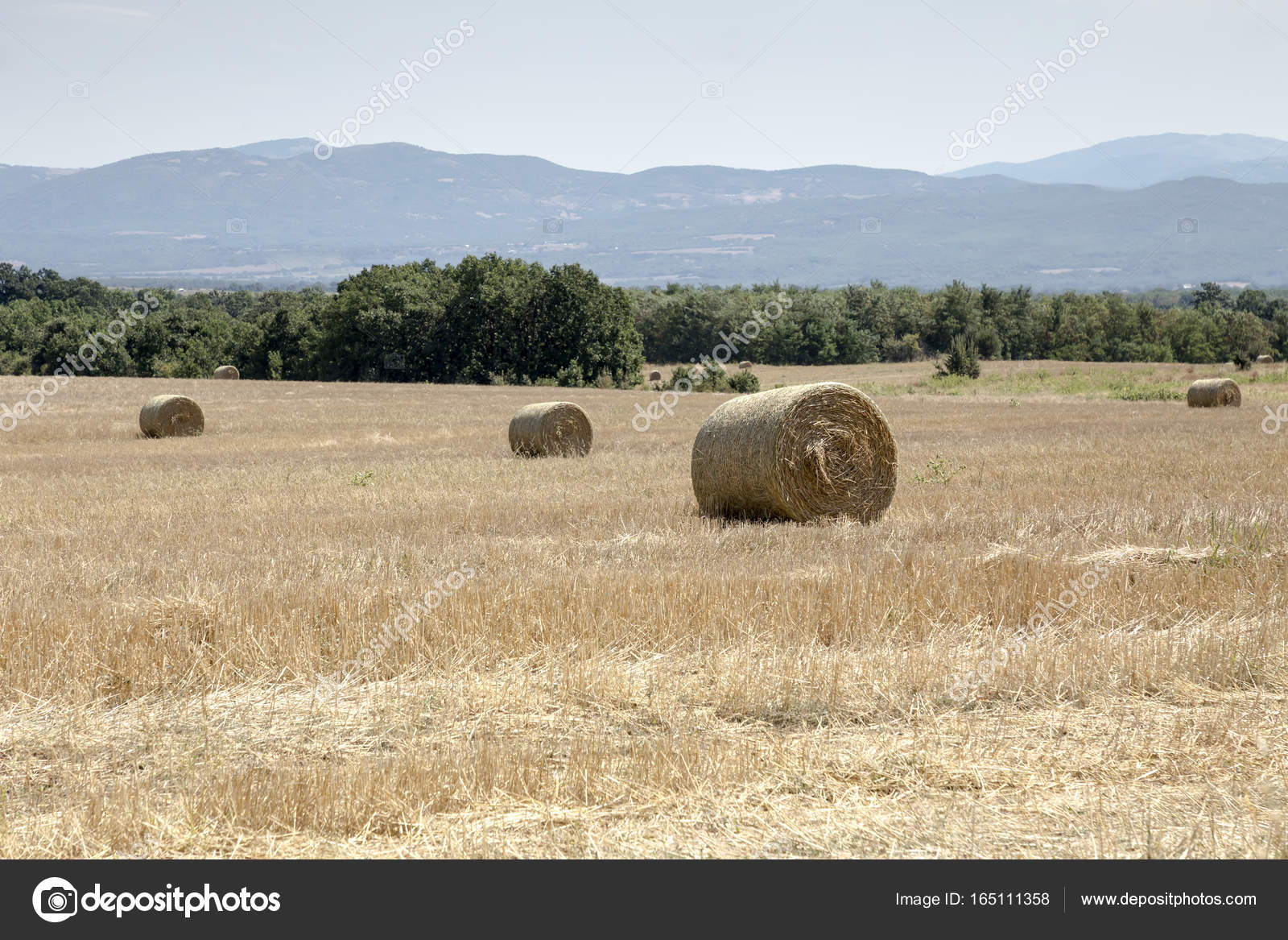 Summer Rural Landscape With Straw Rolls In The Field Stock
