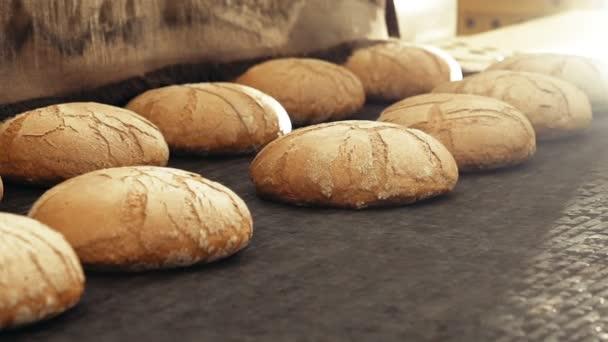 Preparing loafs of wheat bread on conveyer in bakery