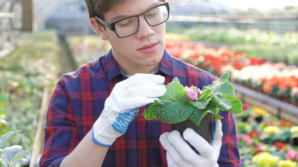 Gardener checking seedling in gardenhouse 4K