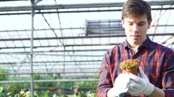 Gardener examining seedling in gardenhouse 4K