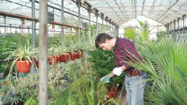 Gardener examining flowerpots in gardenhouse 4K
