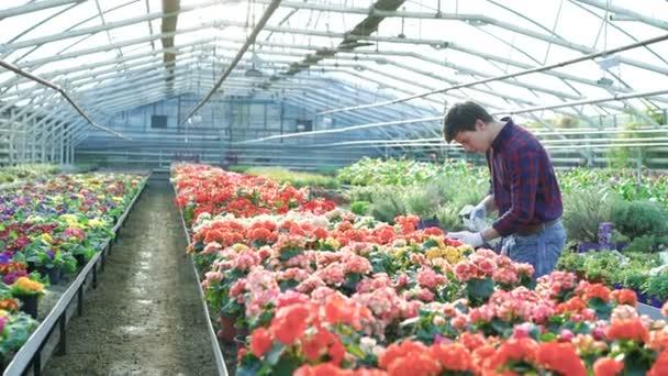 Gardener spraying flowers in gardenhouse 4K