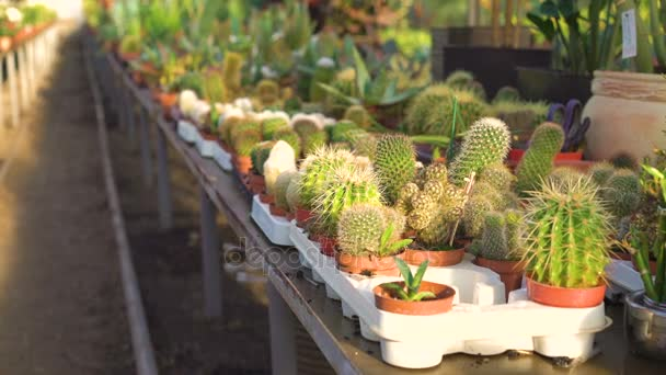 Many kinds of cactuses in garden house 4K