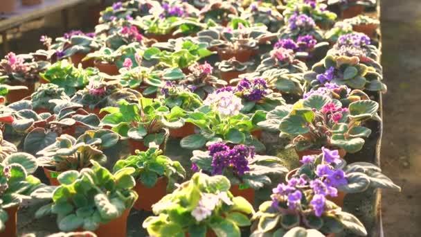 Background of flowerpots in gardenhouse 4K