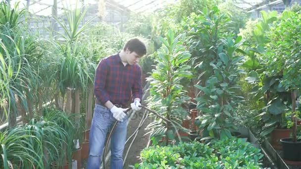 Gardener watering flowers and trees in gardenhouse 4K