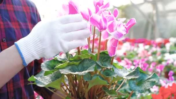 Close up gardener examining flowerpot in gardenhouse 4K