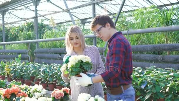 Gardeners checking flowerpots in gardenhouse 4K
