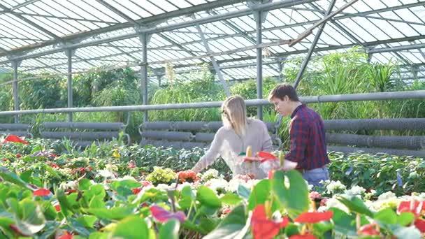 Gardeners spraying flowerpots in gardenhouse 4K
